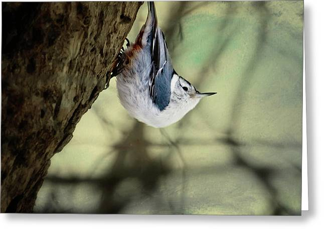 Nuthatch   Greeting Card