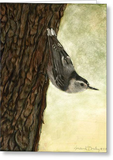 Nuthatch Acrobat Greeting Card by Susan Donley