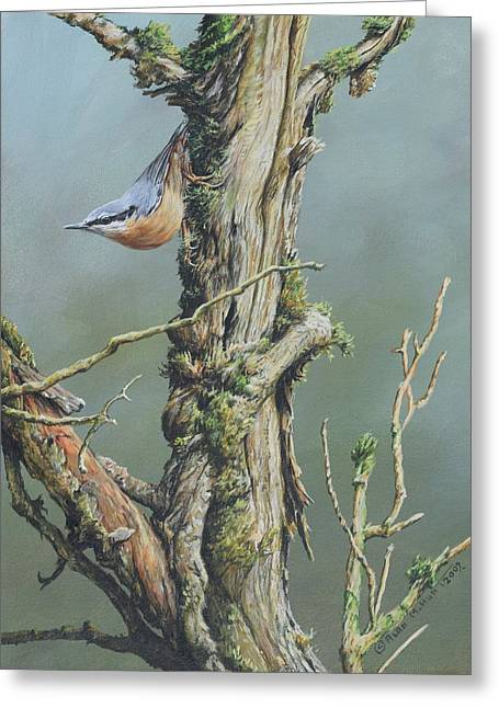 Greeting Card featuring the painting Nuthatch by Alan M Hunt