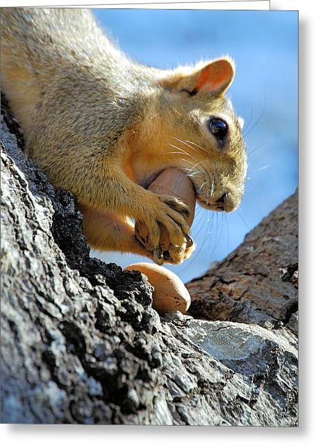 Greeting Card featuring the photograph Nutjob by Debbie Karnes