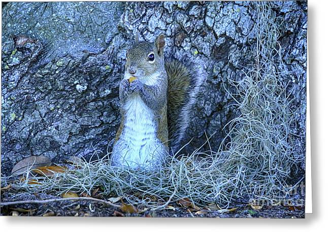 Greeting Card featuring the photograph Nuts Anyone by Deborah Benoit