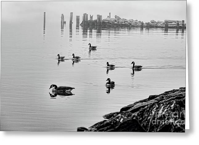 Nyack Geese  Greeting Card by Chuck Kuhn
