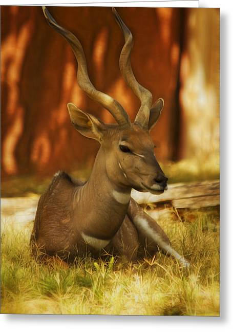 Nyala 3 Greeting Card