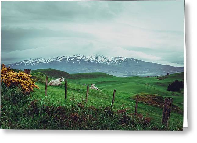 Nz Dreaming Greeting Card