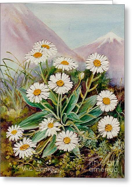 Nz Mountain Daisy Greeting Card by Val Stokes