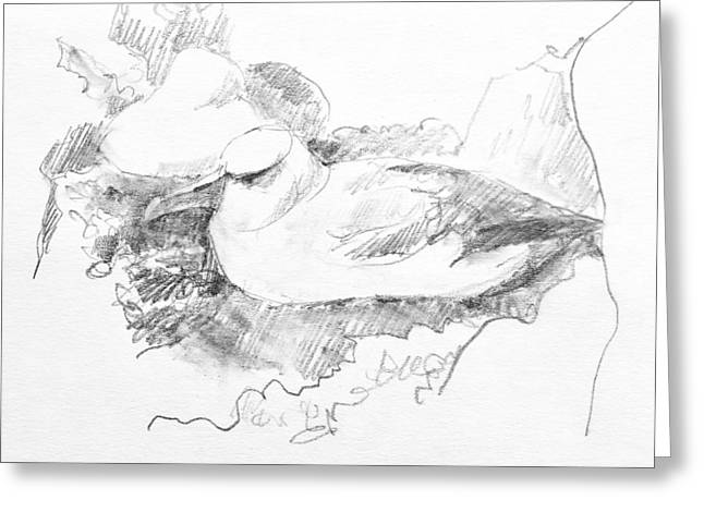 New Zealand White-capped Mollymawk Greeting Card