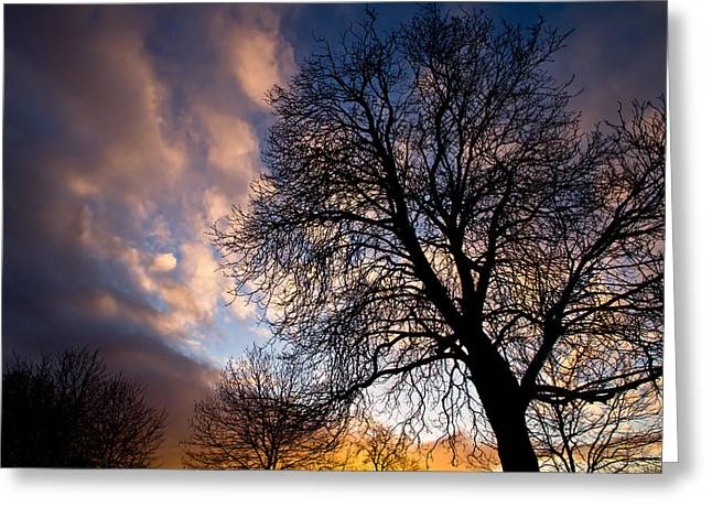 Oak Against The Sky Greeting Card by Justin Albrecht