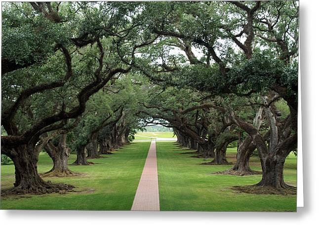 Oak Alley Greeting Card by Peter Verdnik