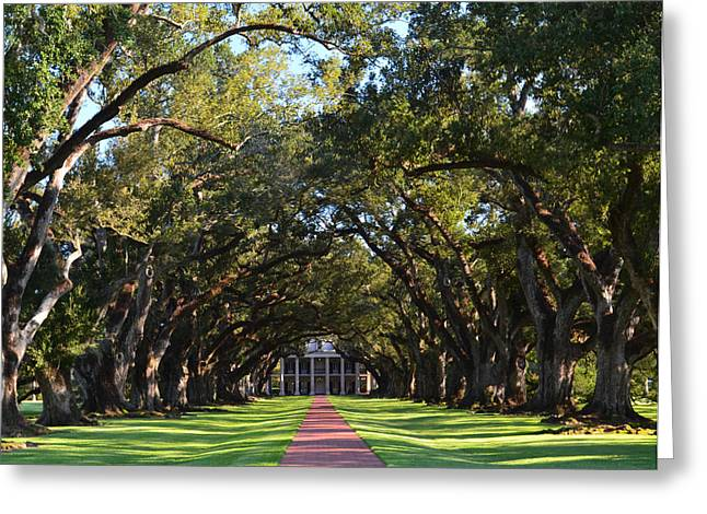Oak Alley Plantation Greeting Card by Maggy Marsh