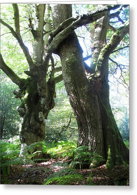 Oak And Beech Embrace Greeting Card