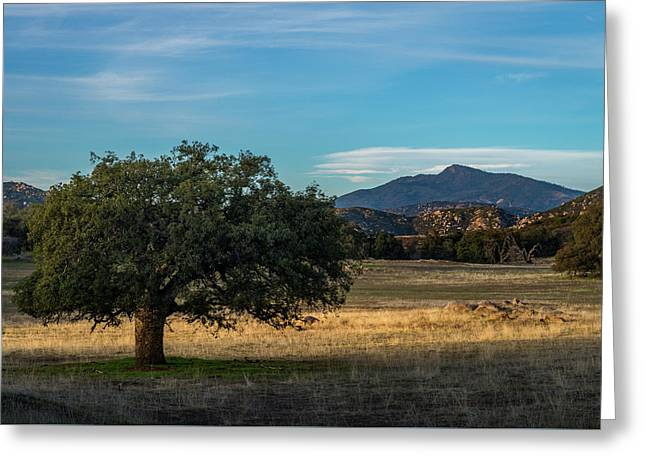 Oak And Cuyamaca Greeting Card