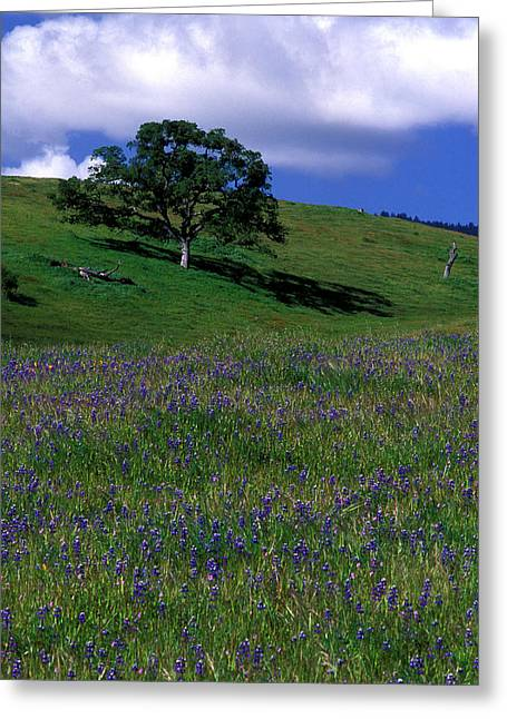 Oak And Lupine Greeting Card by Kathy Yates