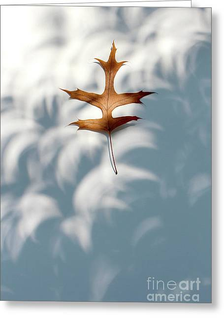 Solar Eclipse Crescents Over Oak Leaf Greeting Card