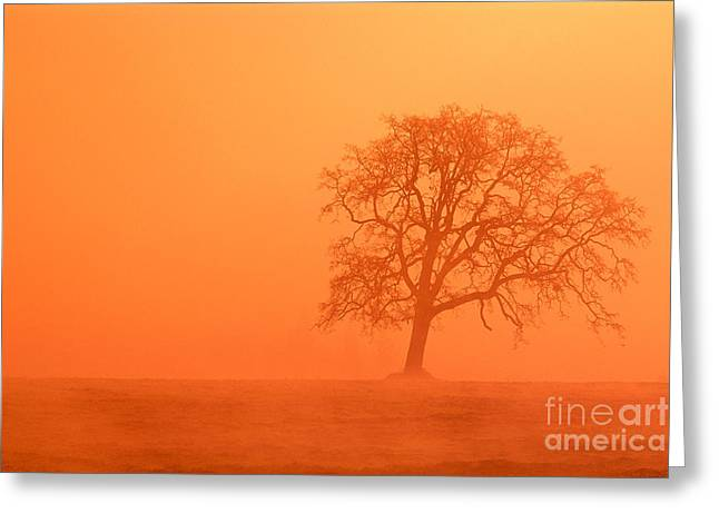 Oak At Sunrise Greeting Card by Greg Vaughn - Printscapes