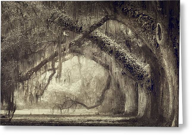 Oak Avenue Greeting Card by Magda Bognar