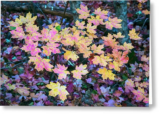 Oak Creek Canyon Fall Colors Greeting Card