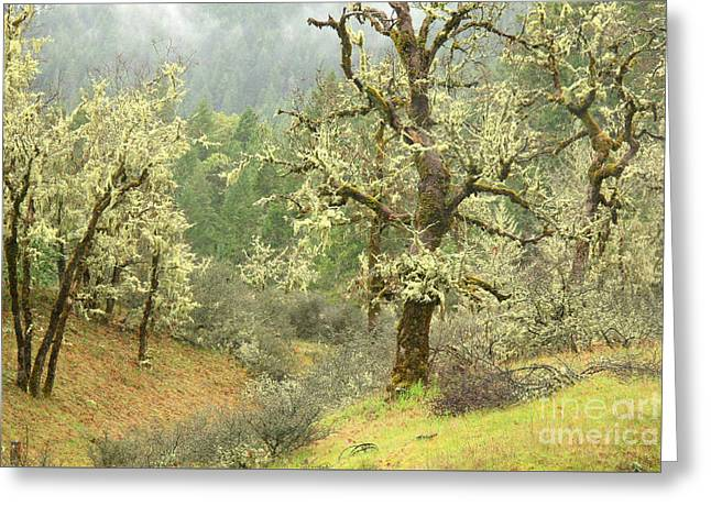Oak Forest Greeting Card by Frank Townsley