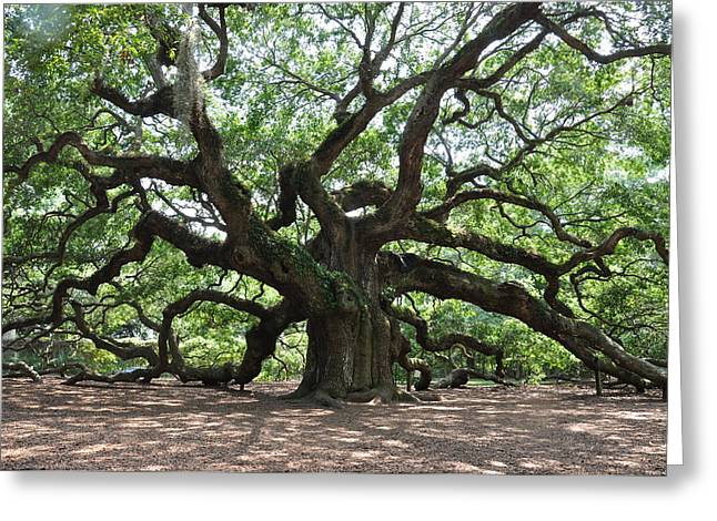 Angel Oak Photographs Greeting Cards - Oak from the day  Greeting Card by Sabrina  Hall