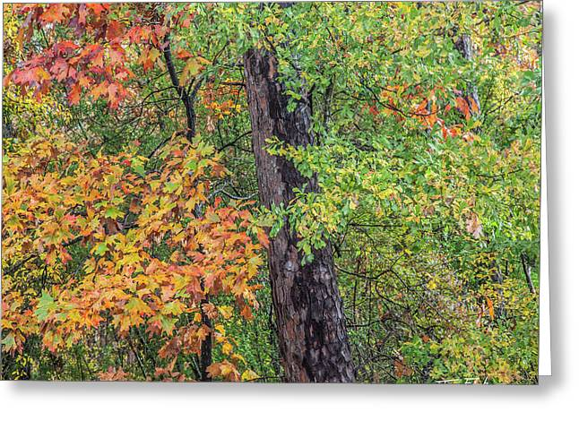 Oak Hickory Woodland Greeting Card by Tim Fitzharris