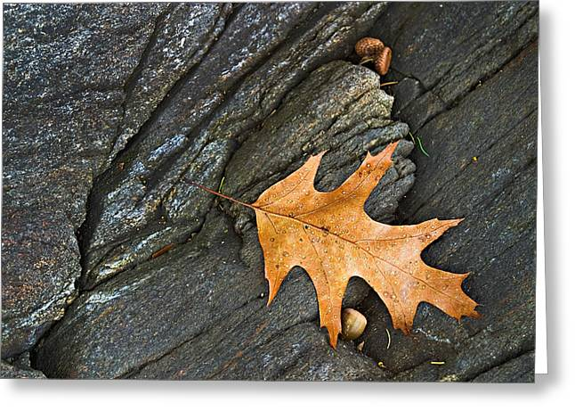 Oak Leaf On The Rocks Photo Greeting Card by Peter J Sucy