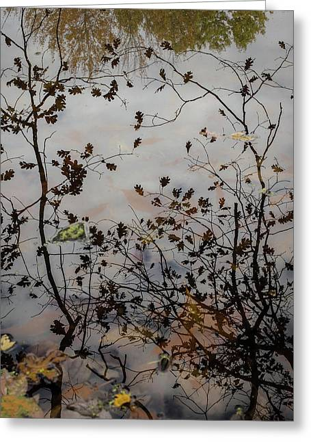 Oak Leaf Reflection At Spirit Springs Greeting Card