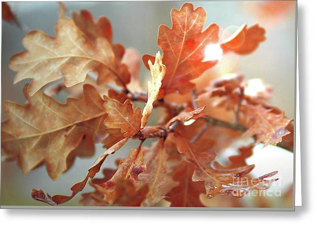 Oak Leaves In Autumn Greeting Card