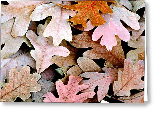 Oak Leaves Photo Greeting Card