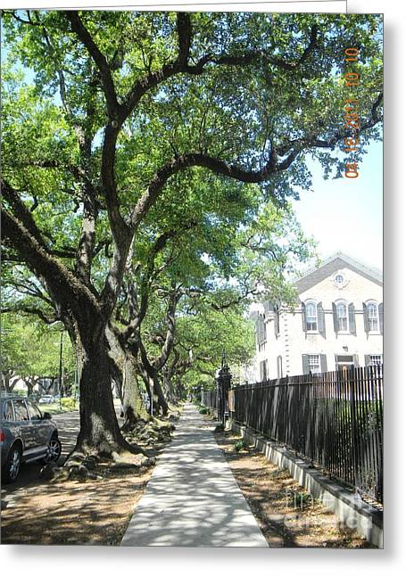 Oak-lined Sidewalk Greeting Card