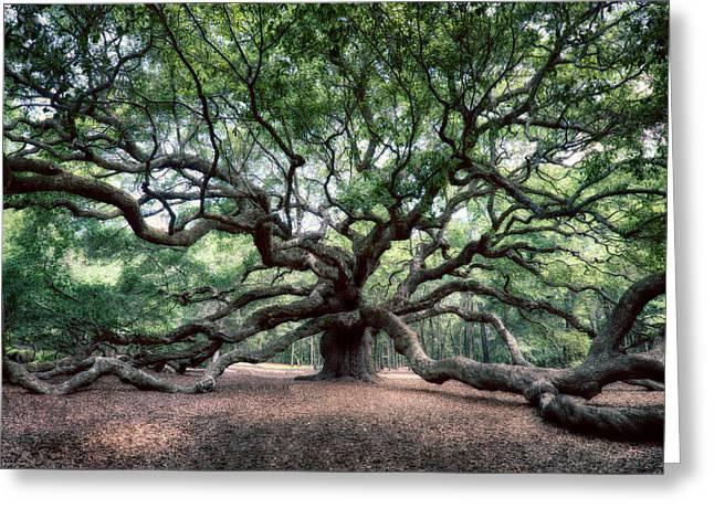 Oak Of The Angels Greeting Card by Renee Sullivan