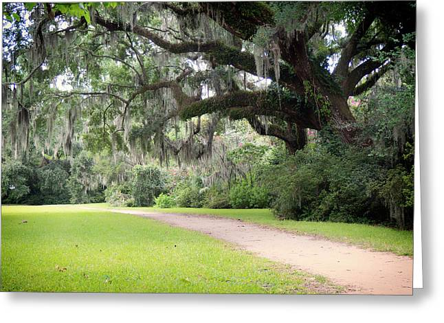 Greeting Card featuring the photograph Oak Over The Trail by Michael Colgate