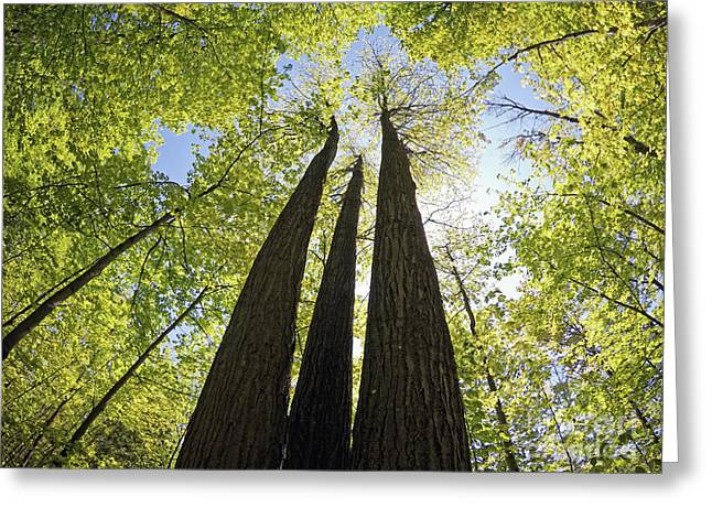 Oak Ridges Moraine Forest Greeting Card