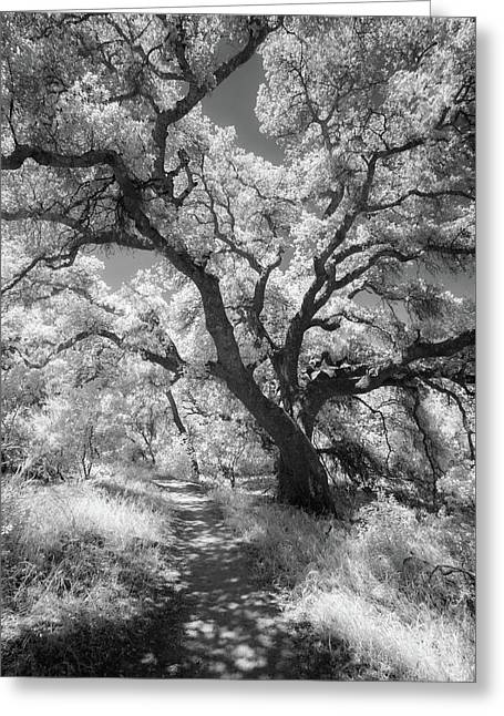 Oak Shaded Trail Greeting Card