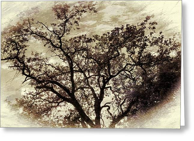 Greeting Card featuring the photograph Oak Tree by Athala Carole Bruckner