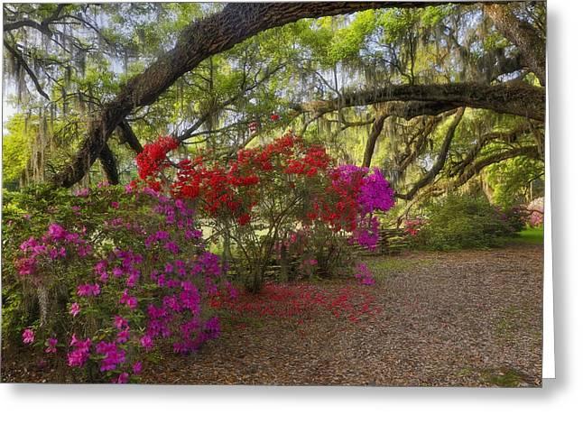 Greeting Card featuring the photograph Oak Tree Azaleas by Ken Barrett