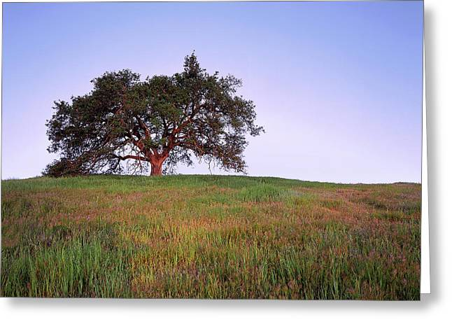 Oak Tree Glow Greeting Card