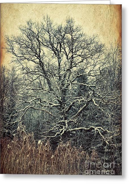 Oak Tree In Winter Greeting Card by Jutta Maria Pusl