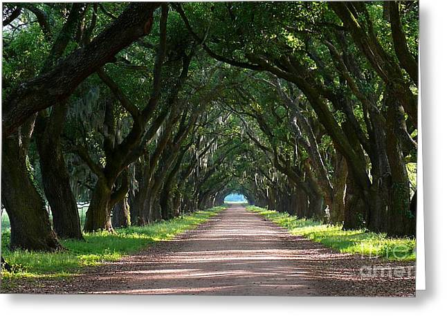 Oak Tree Path Greeting Card