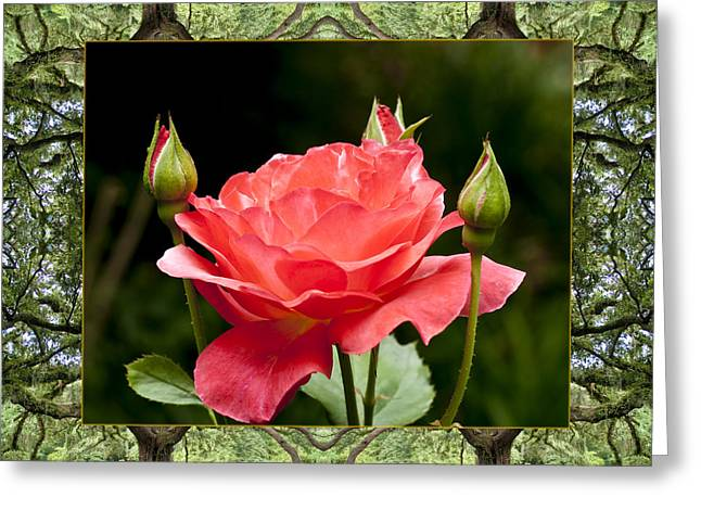 Oak Tree Rose Greeting Card