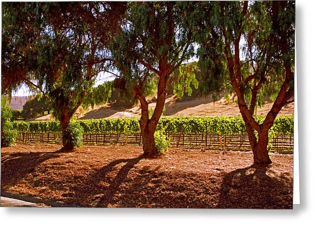 Oak Trees And Vines Greeting Card by Gary Brandes