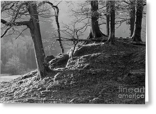 Oak Trees In Monochrome Greeting Card