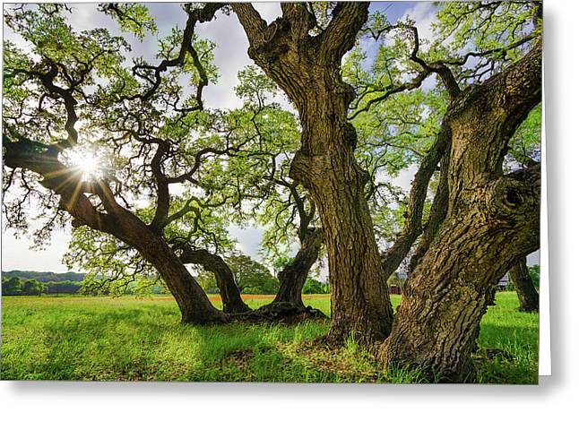 A Star And Oak Trees Of Independence, Texas Greeting Card by Ellie Teramoto
