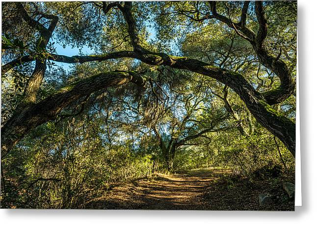Greeting Card featuring the photograph Oaks Arching Over Trail At Daley Ranch by Alexander Kunz