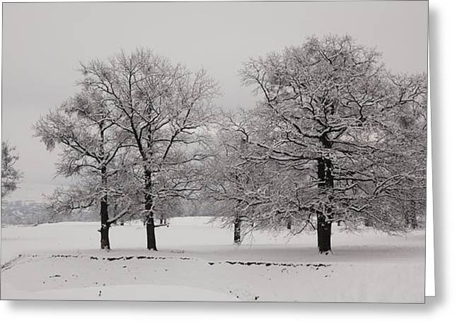 Snowy Day Greeting Cards - Oaks in winter Greeting Card by Gabriela Insuratelu