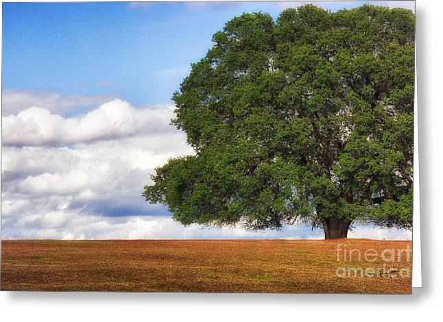 Oaktree Greeting Card