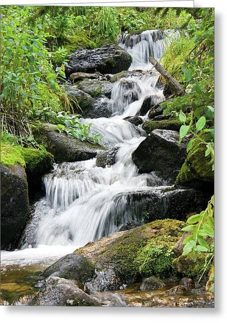 Greeting Card featuring the photograph Oasis Cascade by David Chandler