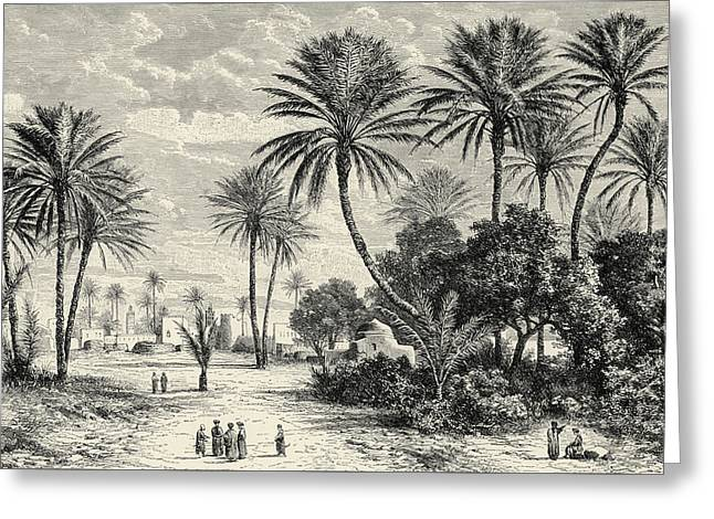 Oasis Of Gafsa  Tunis Greeting Card by Charles Brabant