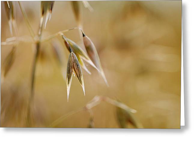 Summer Oat Greeting Card by Nailia Schwarz