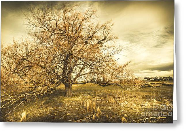 Oatlands Autumn Tree Greeting Card by Jorgo Photography - Wall Art Gallery