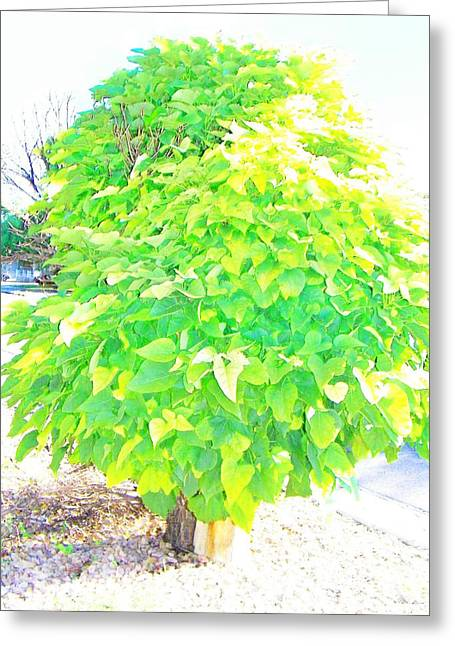 Greeting Card featuring the photograph Obese American Tree by Lenore Senior