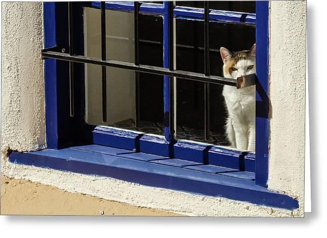 Observant Kitty In Window Greeting Card